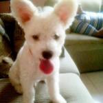 Puppi, el niño de la casa