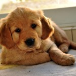 img_cuando_debo_vacunar_a_mi_perro_18875_orig