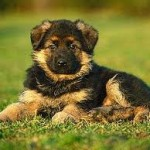 linda-cachorra