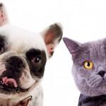 Nombres de gatos y perros