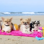 Razas de perros más populares