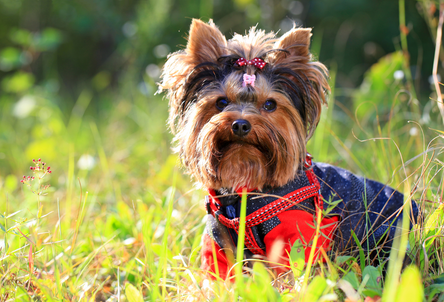 razas de perros m u00e1s populares