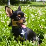 Las 5 razas de perros más comunes en España