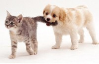 cute+cats+and+puppies010