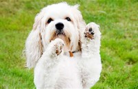 perro-amigable