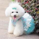 fotos-tiernas-de-perritos-con-disfraz-2