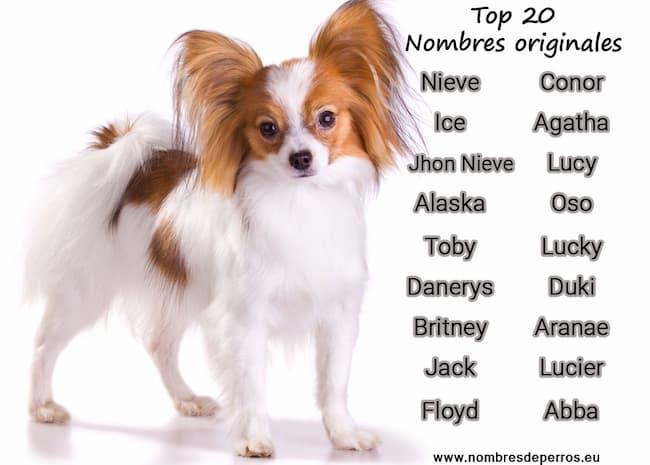 Nombres originales para perros