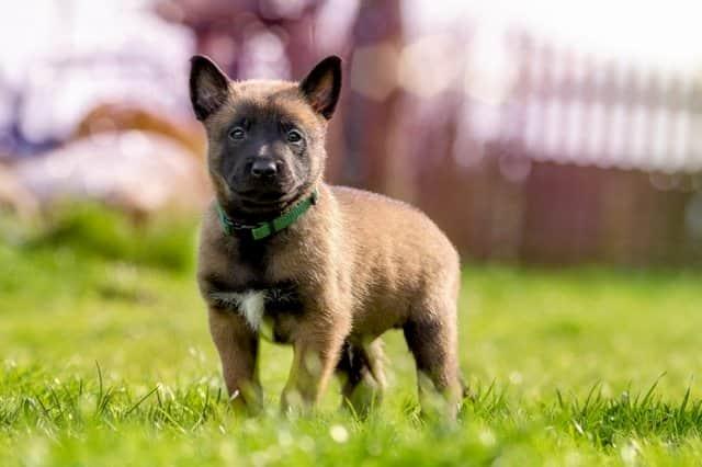Cachorro con 2 meses y medio