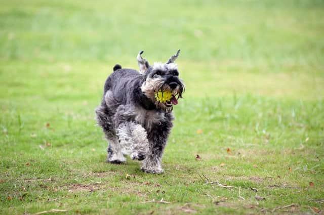 Macho llamado Félix con una pelota en la boca