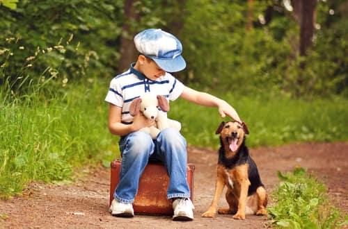 niño alemán con su perro