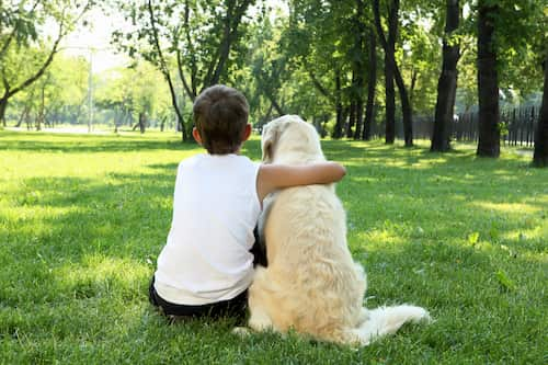 Niño con su perro golden retriever en hyde park, londres