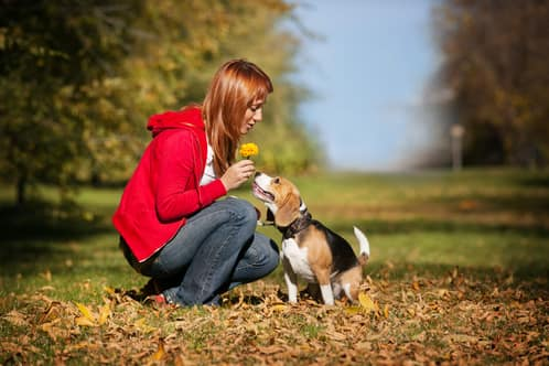 Nombres alemanes para perros beagle y otras razas