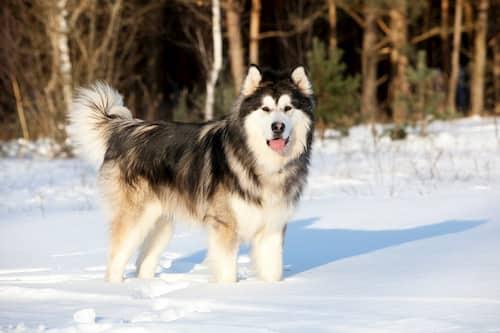 Nombres para perros alaska hembra