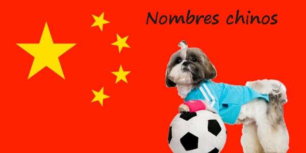 Mejores nombres chinos para perros