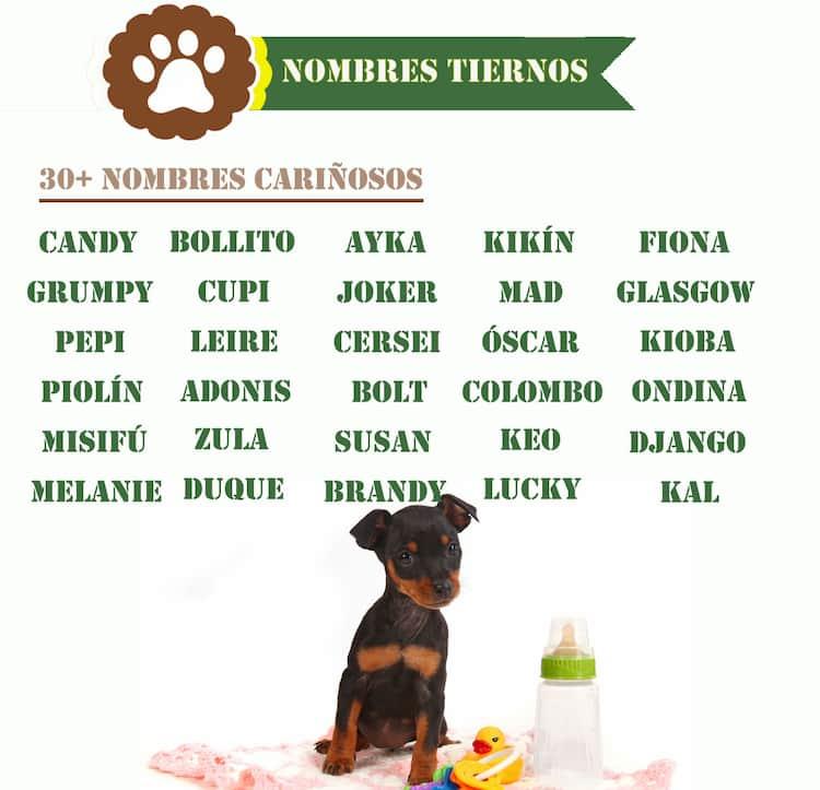 nombres tiernos para perros