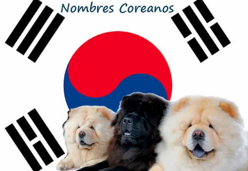 Nombres coreanos para perros