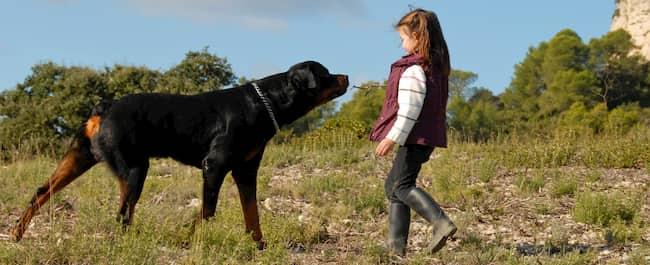 Rottweiler con una niña rusa en el monte