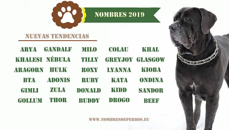 Nuevas tendencias de 2019 en nombres para perros