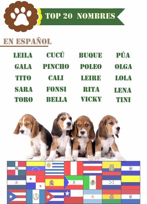 top 20 nombres de perros en español