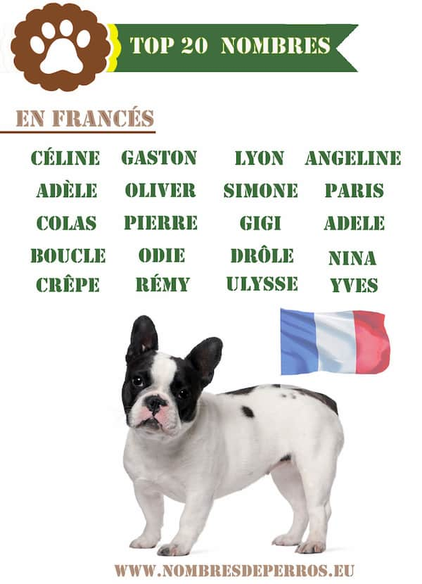 Mejores nombres de perros en francés