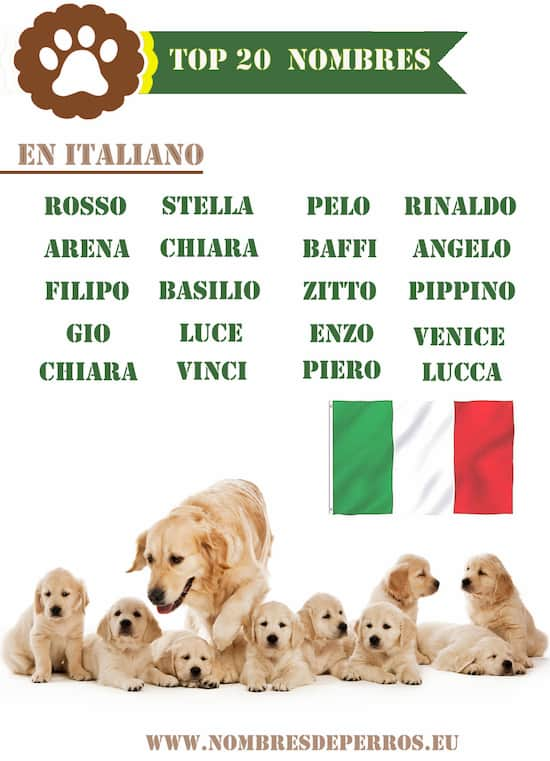 Top 20 nombres en italiano para perros