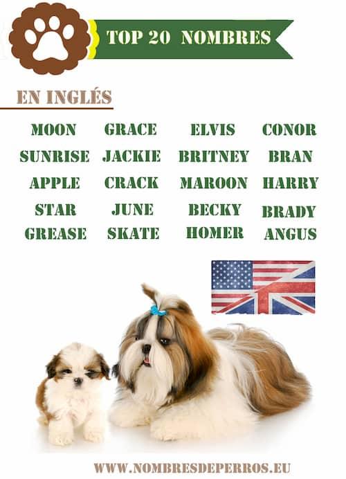 top 20 nombres de perros en inglés
