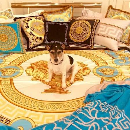 audrey perro famoso de donatella versace
