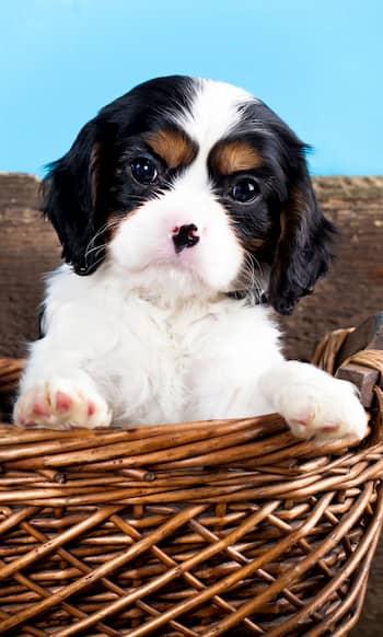 cachorro con manchitas marrones