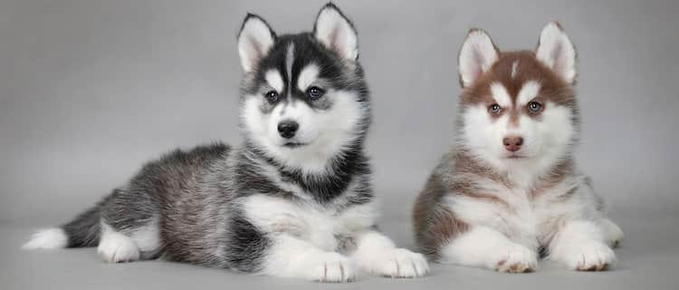 nombres nórdicos para perros