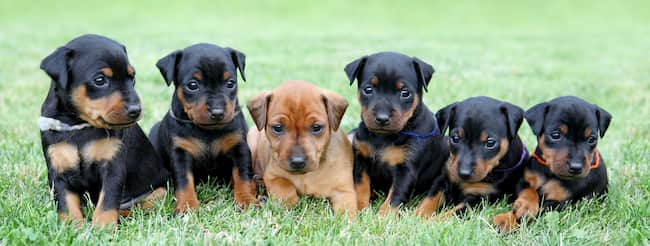 nombres raros para perros