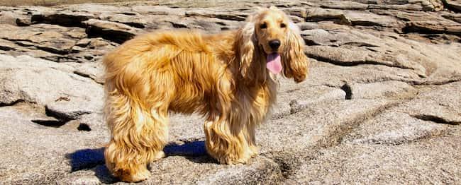 Perro en las islas griegas