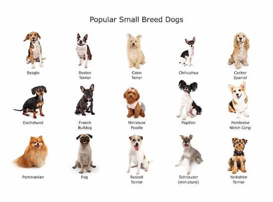 razas de perros miniatura con nombre