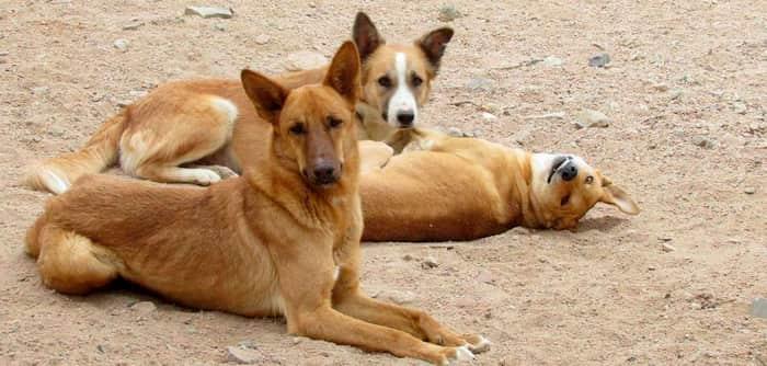 nombres egipcios para perros