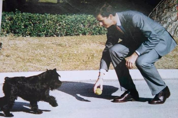 perro del rey felipe de españa