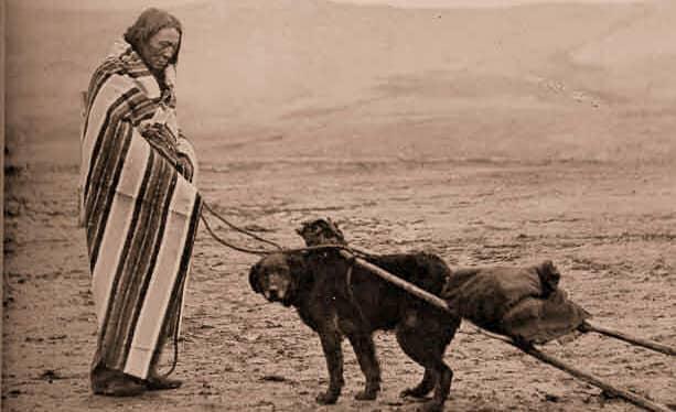 perro maori