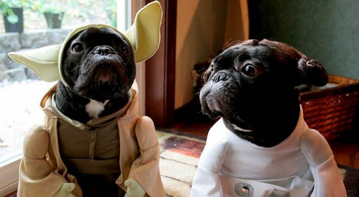 perros de star wars