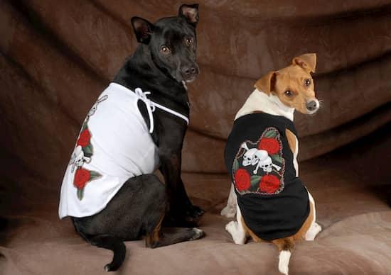 nombres perros machos rockeros