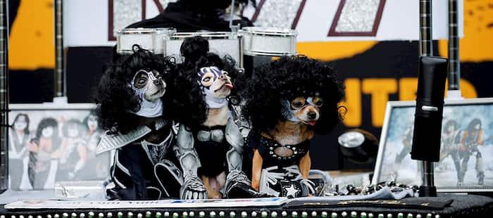 perros rockeros