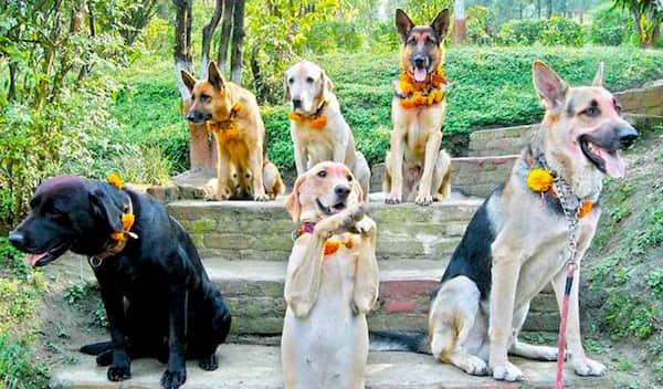 6 perros hindúes