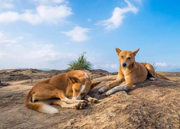 nombres hindús para perros