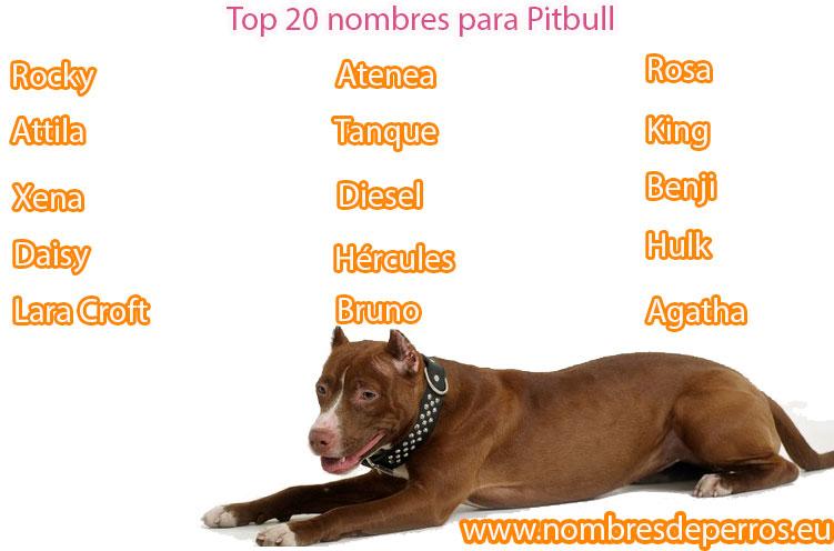 Nombres para Pitbull más populares