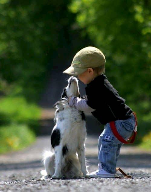 niño con su precioso perro blanco y negro