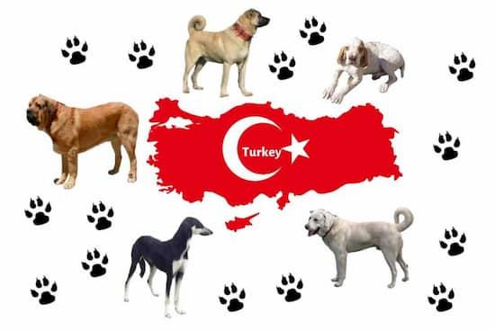 nombres turcos para perros