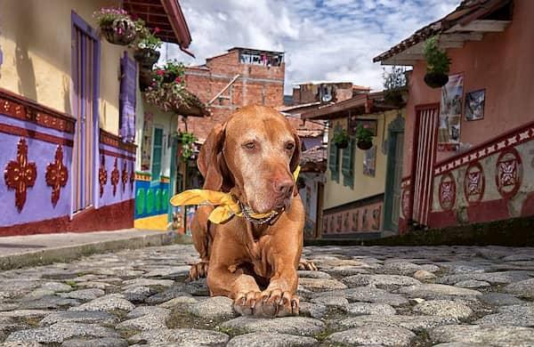 nombres colombianos para perros
