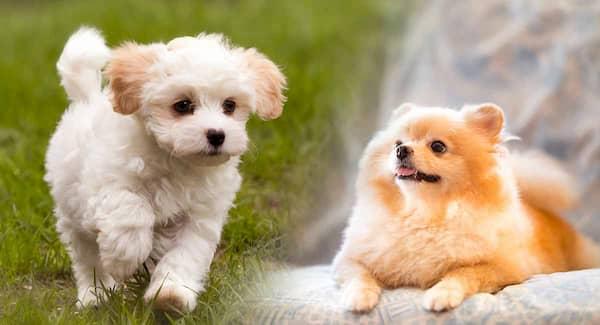 nombres para perros hembras pequeñas