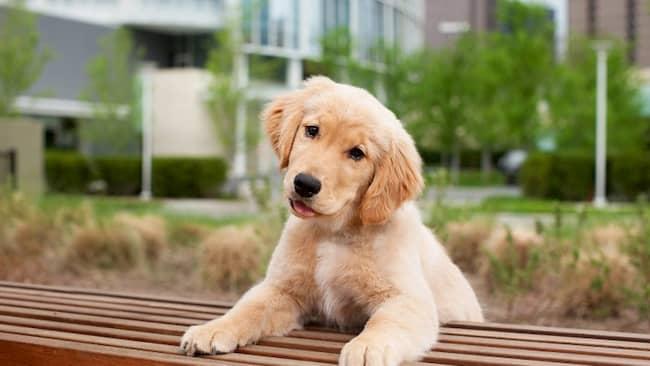 perro macho colombiano en el parque
